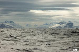 Surowy obraz Grenlandii wschodniej