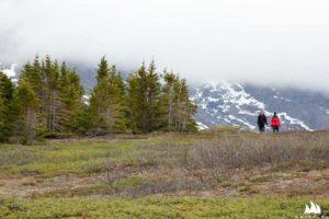 Jeden z nielicznych lasów na Grenlandii