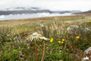 Lato na Grenlandii ;)