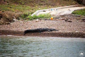 tylko kajmany pływają w kanale za darmo ;)