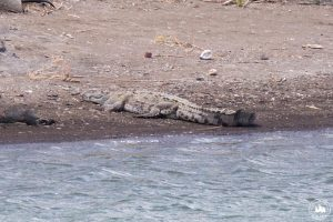 Kiedy Maite zobaczyła krokodyla, to wszyscy podskoczyliśmy z zachwytu