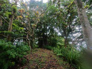 Drzewa i krzewy przyjmują różne formy