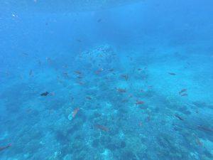 Nurkowanie przy Isla del Coco to marzenie wielu nurków
