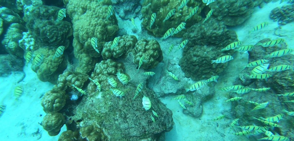 Rybki w wodzie snorklowanie