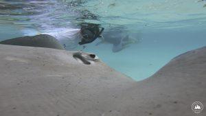 plaszczka polinezja francuska rejs morski