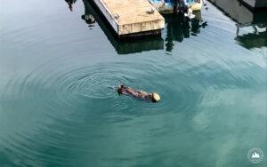 Wydra morska Kodiak