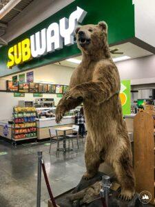 Miś w supermarkecie