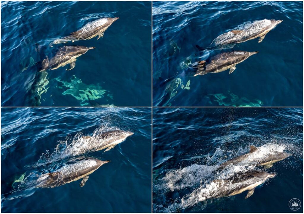 delfiny jacht Crystal
