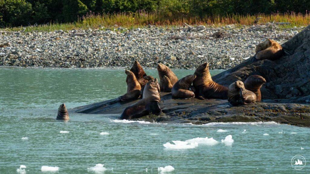 uchatki Alaska