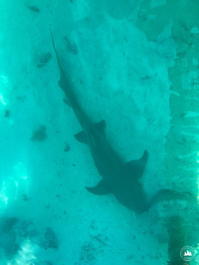 Śpiący na dnie rekin