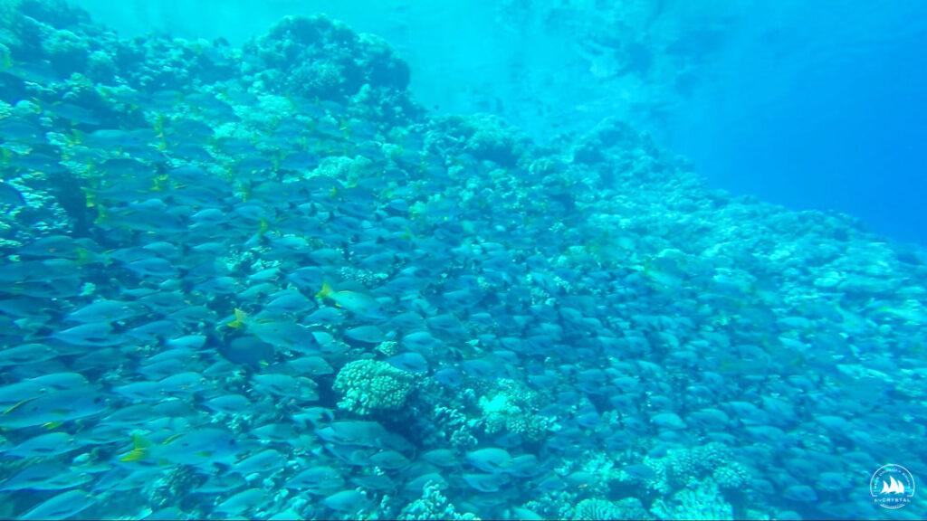 Kolorowe rybki w wejściu do atolu Fakarava