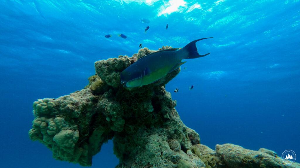 Papugoryba na atolu Tahanea - Tuamotu